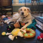 Mickey dog training Centreville, VA