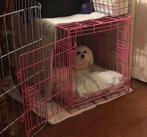 Dog Separation Anxiety Fairfax