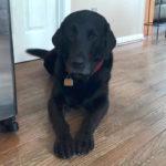 dog aggression separation anxiety manassas