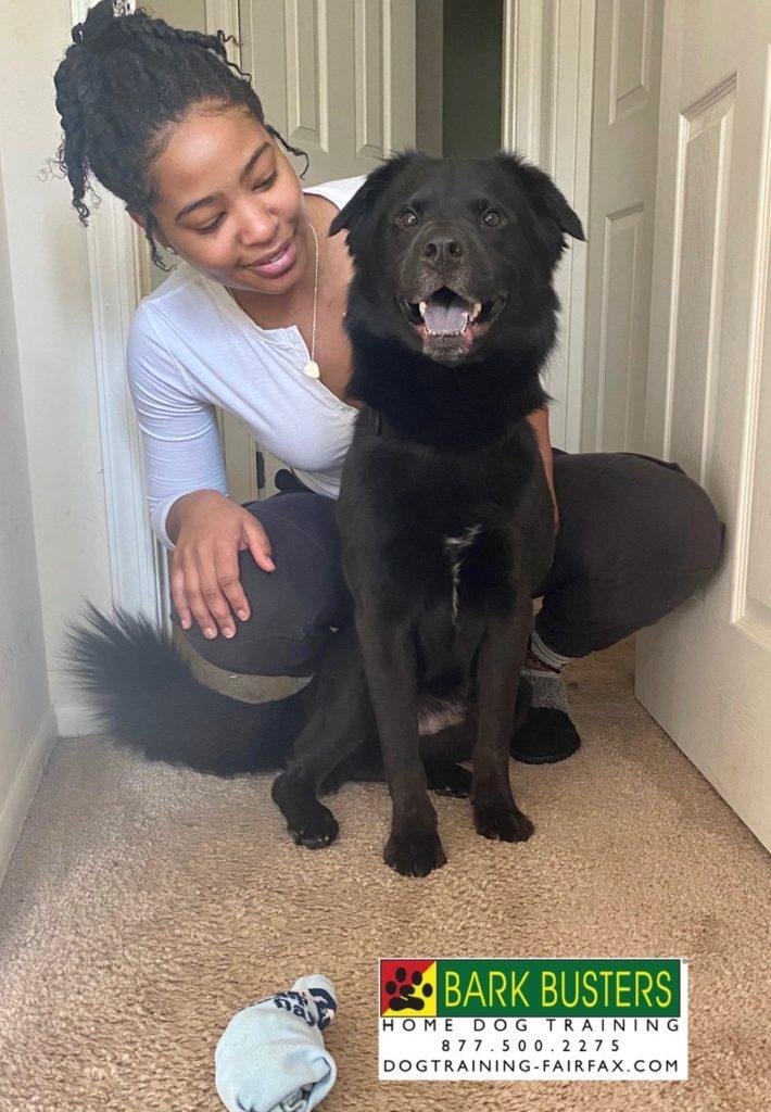 Virtual Dog Trainer in Centreville, VA